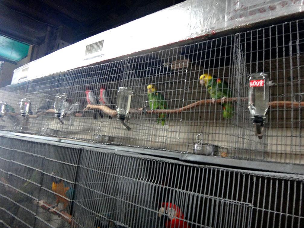 Redland-Market-Village-Pet-Shop-Birds