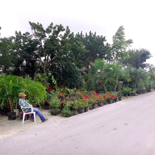 Redland-Market-Village-Plant-Nursery