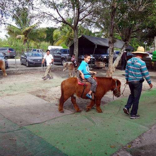 Redland-Market-Village-Pony-Rides